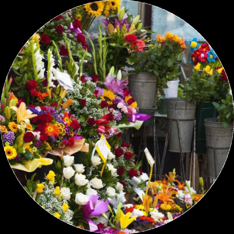 Blumen Ganter Aschaffenburg Home